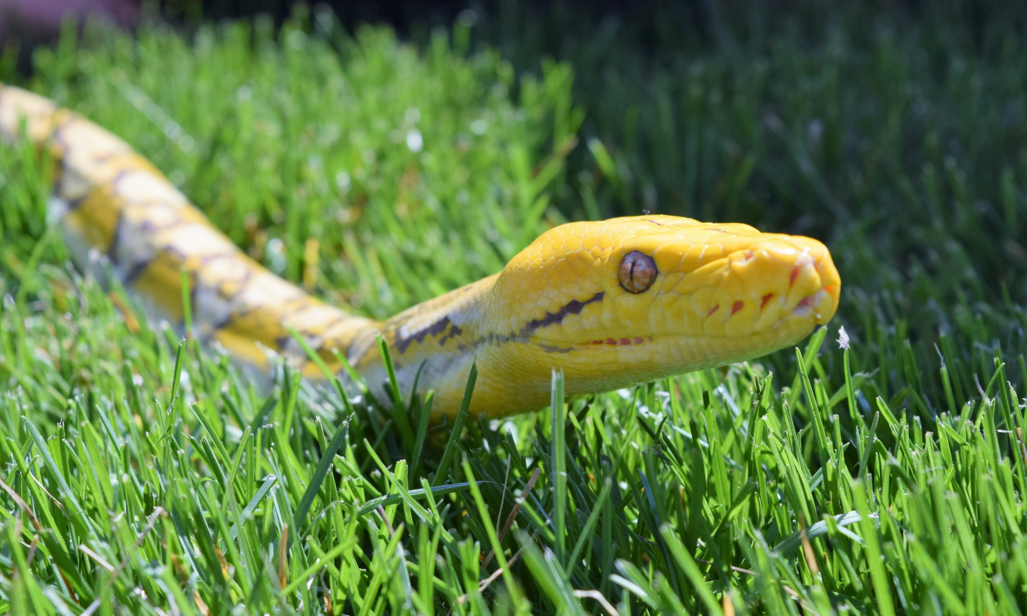 Kalamazoo Reptile Expo